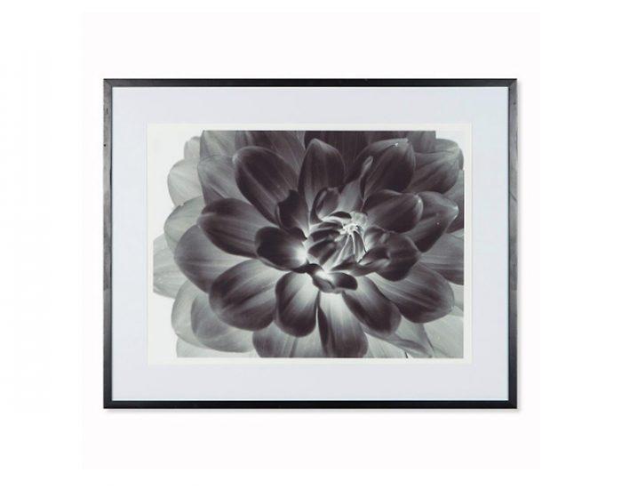 Tranh Black Flower