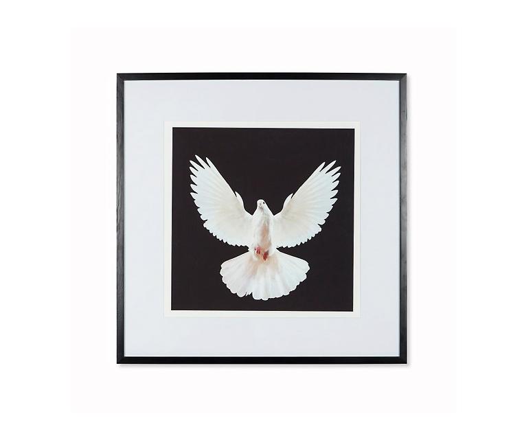 Tranh Dove - A